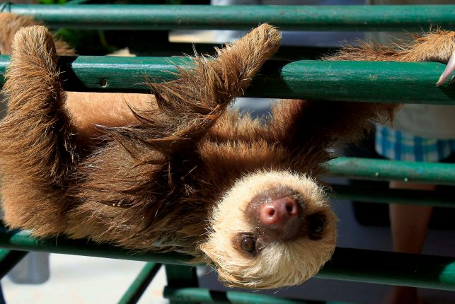 Sloth Sanctuary Costa Rica - drying off