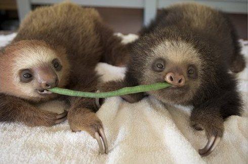 Sloth Sanctuary Costa Rica - romantic