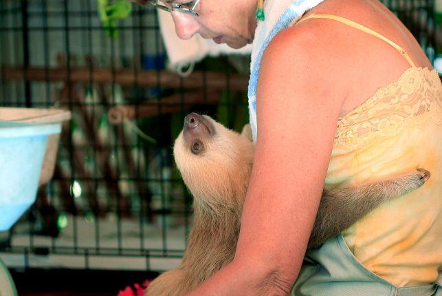 Sloth Sanctuary Costa Rica - smile