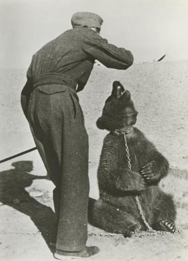 Wojtek Bear - Hero in Iran