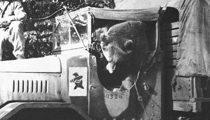 Wojtek Bear - In Vehicle