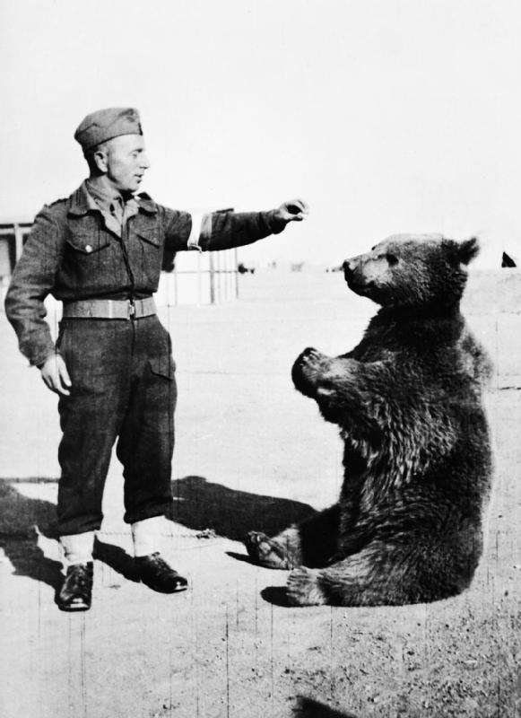 Wojtek Bear - Polis sholdier feeding