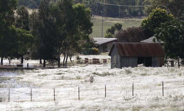 [Image: Australian-Flood-Spiders-2.jpg]