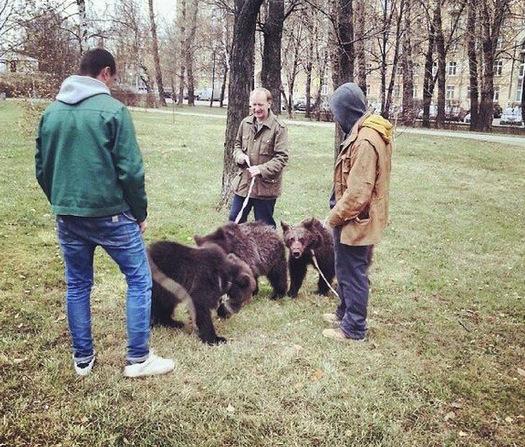 Awesome Russia - Pet bears