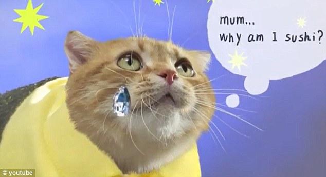 Neko-Sushi Cards - cat