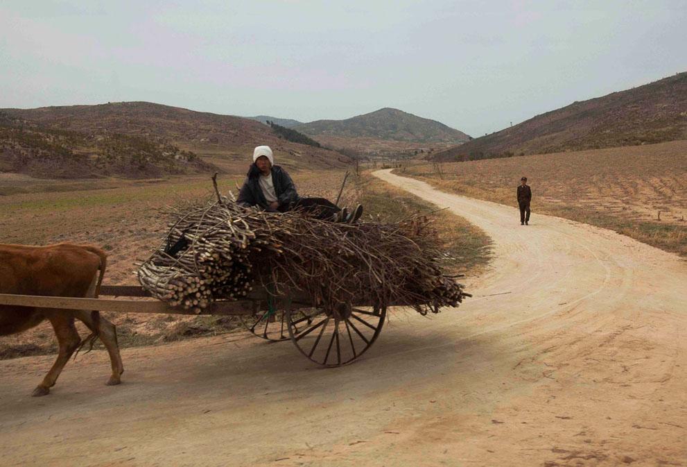 North Korea - horse and cart