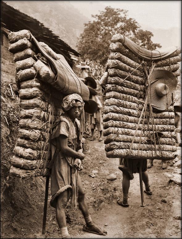Old Photos Of China - Men Laden With Tea, Sichuan Sheng 1908