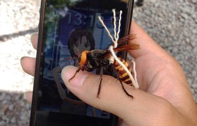 Dead Stinger For A Pet Causes Debate in Japan