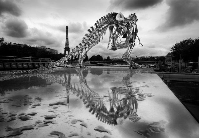 Philippe Pasqua Chrome T-Rex - black and white