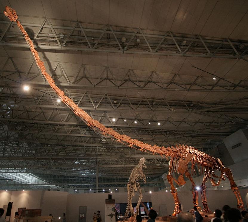 Qijianglong - skeleton - long neck dinosaur