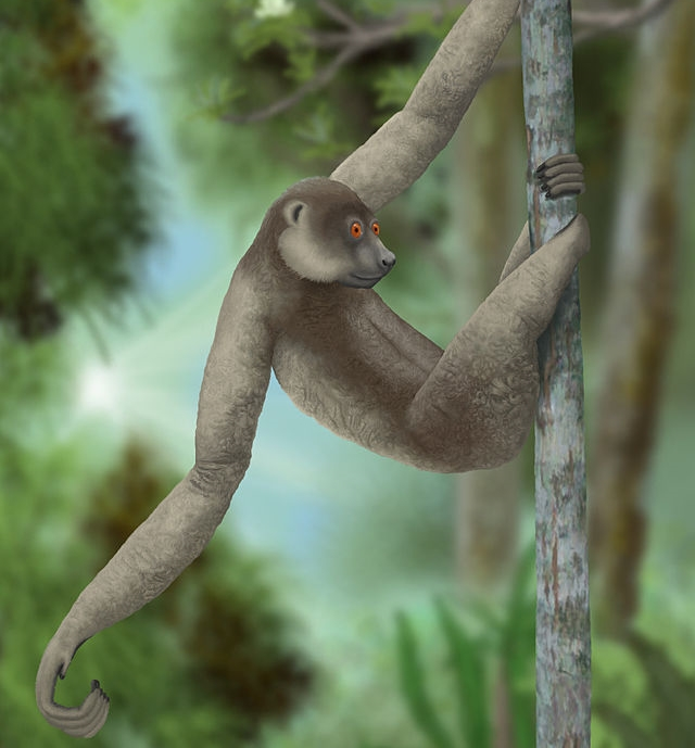 Ancient Giant Lemur - Palaeopropithecus_ingens