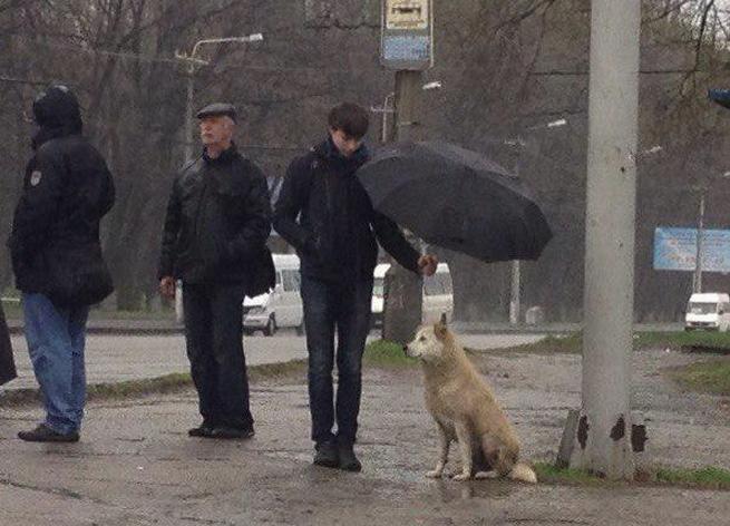 Man Holding Umbrella For Dog