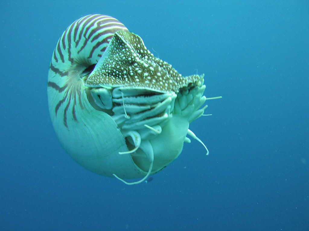 the characteristics of the cephalopods a marine life form Oceanography lecture marine animals:  cephalopods shell reduced or lost in most except nautilus and ammonites  general characteristics: lophophore form .