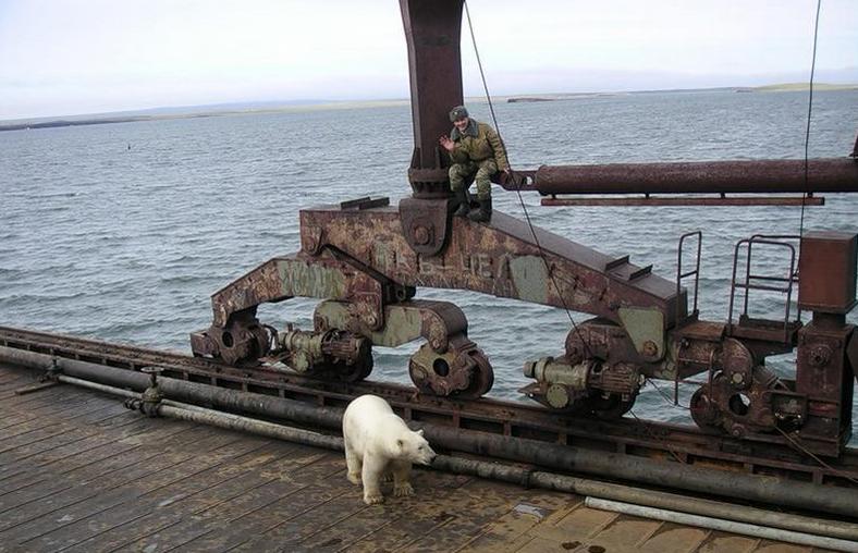Polar Bear Next To Russian Base