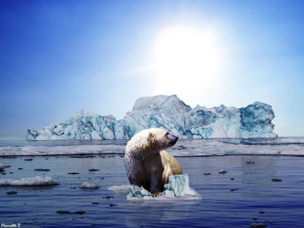 Polar Bears Global Warming Effects