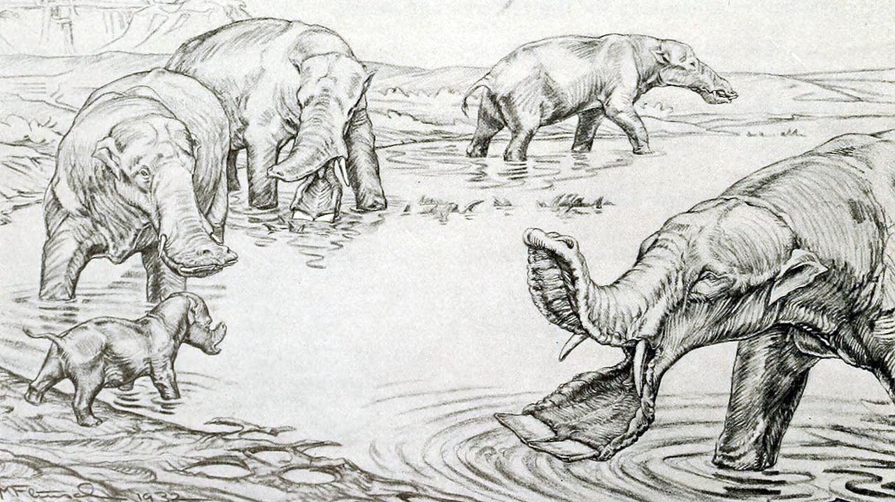 Platybeladon Sketch
