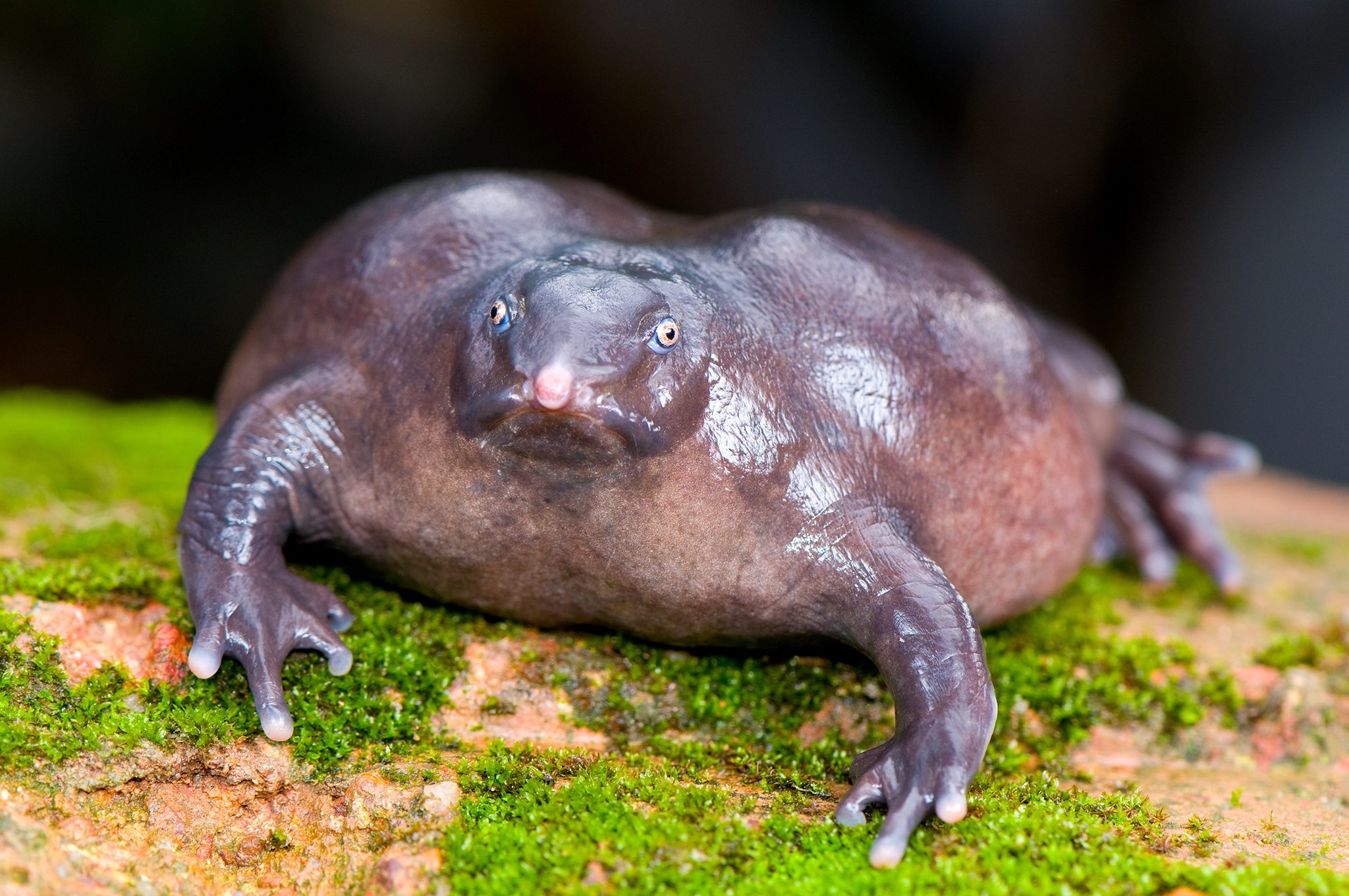 Purple Frog India - Ghat