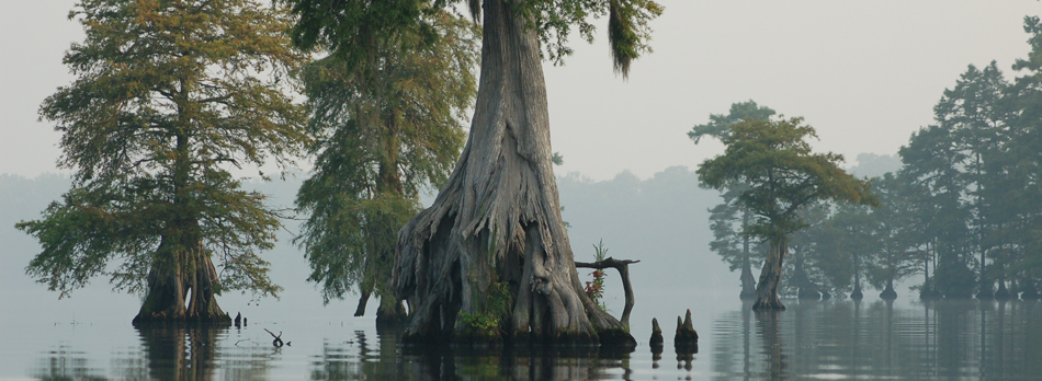 The Great Dismal Swamp - Trees Sumberged