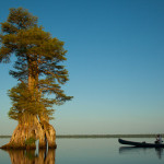 A Short History Of The Great Dismal Swamp