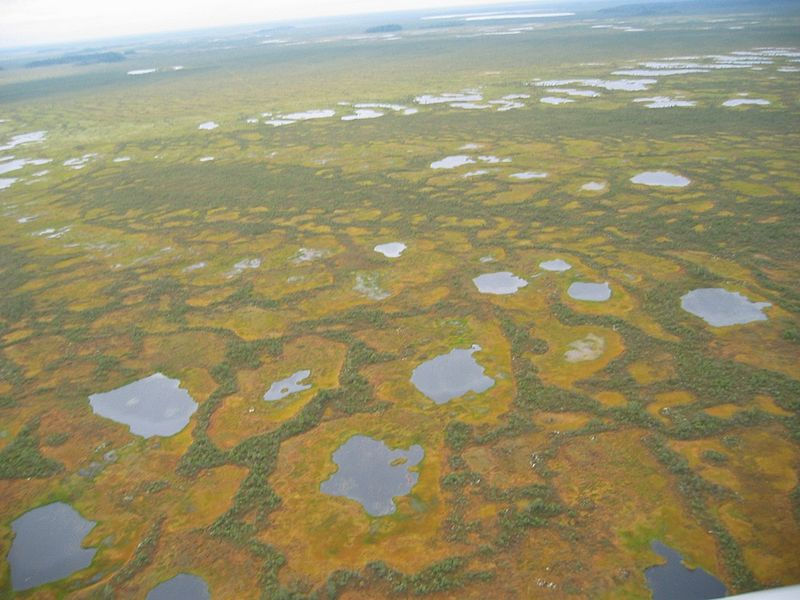 Vasyugan Mire - Biggest Swamp Russia - From The Air