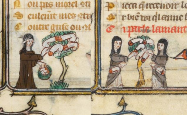 Weird Medieval Art - Penis Tree - 14th Century