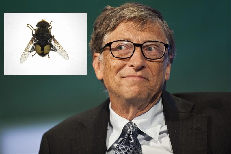 Animal Named After Famous People - Bill Gates Eristalis gatesi