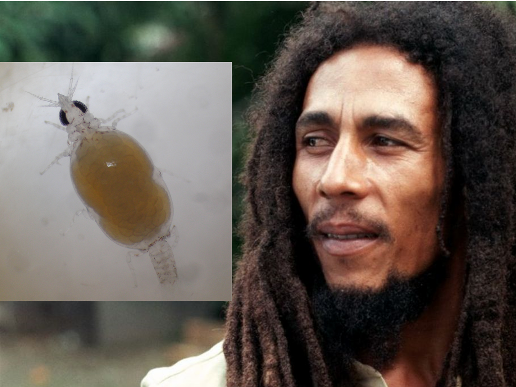 Animal Named After Famous People - Bob Marley Gnathia marleyi