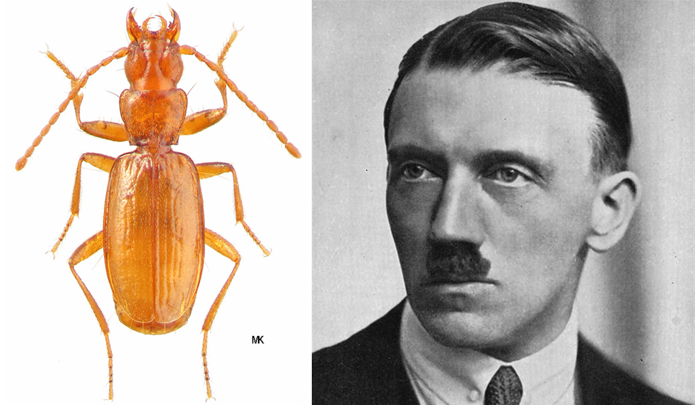 Animal Named After Famous People - Hitler Anophthalmus hitleri