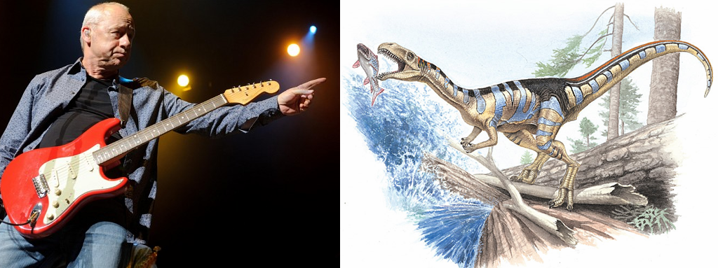 Animal Named After Famous People - Mark Knopfler Masiakasaurus knopfleri