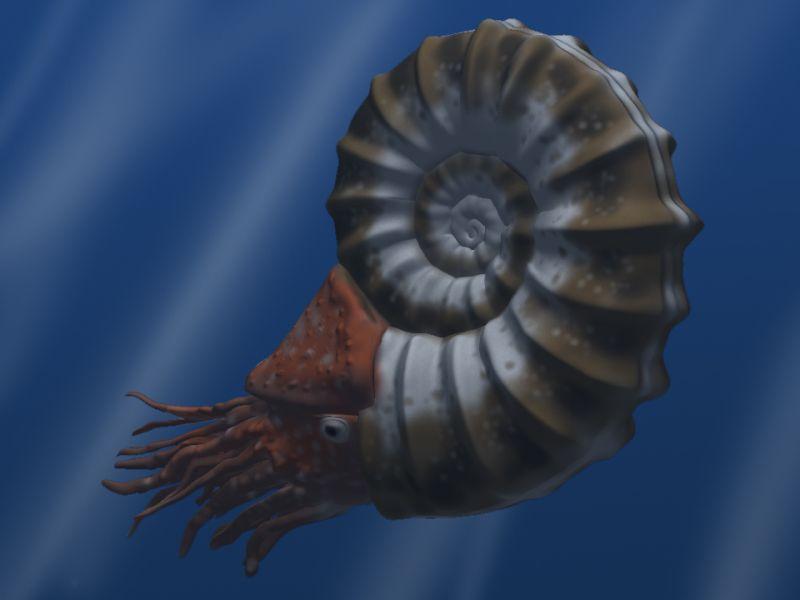 Carboniferous Life - Ammonite