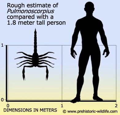 Carboniferous Life - Pulmonoscorpius Size