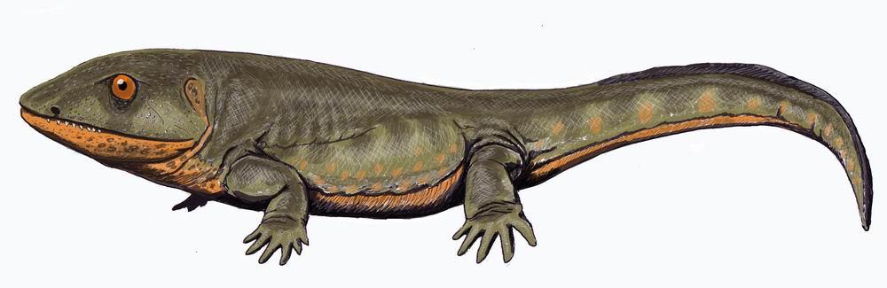 Carboniferous Life - The amphibian-like Pederpes, the most primitive Mississippian tetrapod