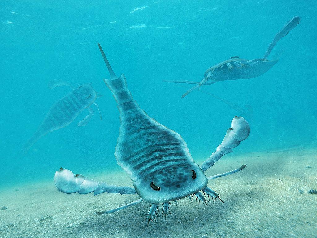 Eurypterus - A Common Eurypterid In The Silurian