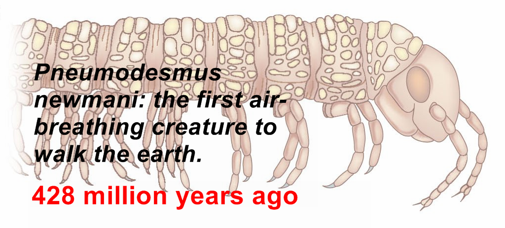 Pneumodesmus newmani -First Animal On Earth