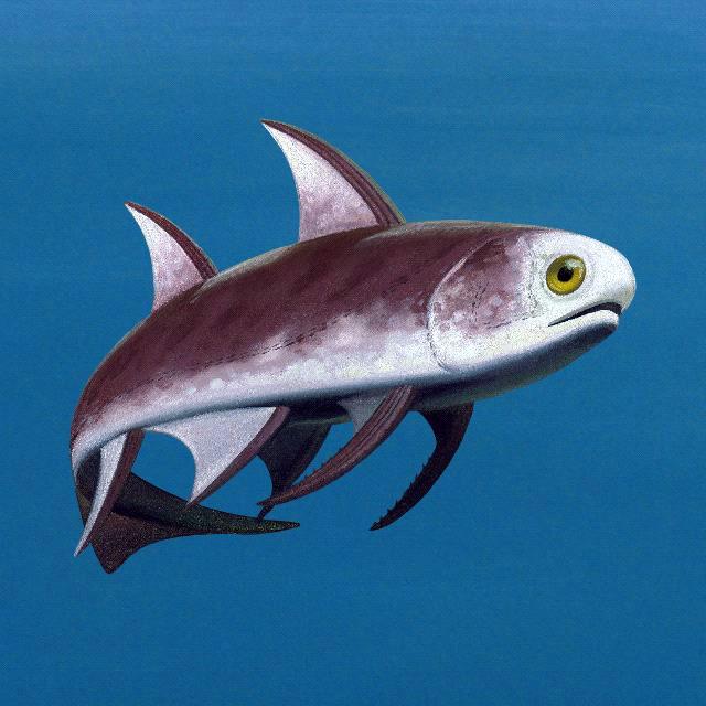 Silurian Acanthodians - Diplacanthus