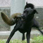 Squirrel Vs Dog