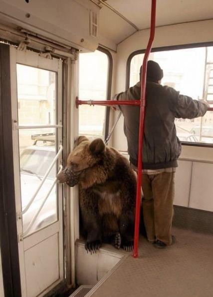 Awesome Photos From Russia With Love - Bear On Buss