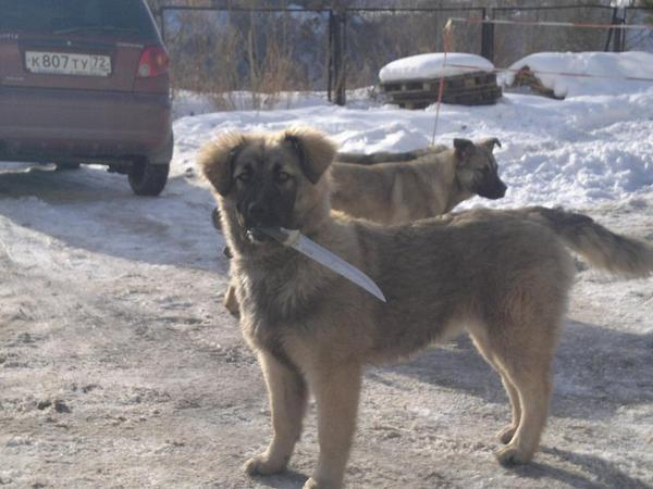 Awesome Photos From Russia With Love - Dog Knife
