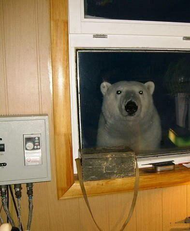 Awesome Photos From Russia With Love - Polar Bear In Window