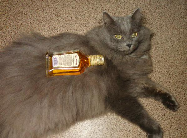 Awesome Photos Russia With Love - Drunk Cat