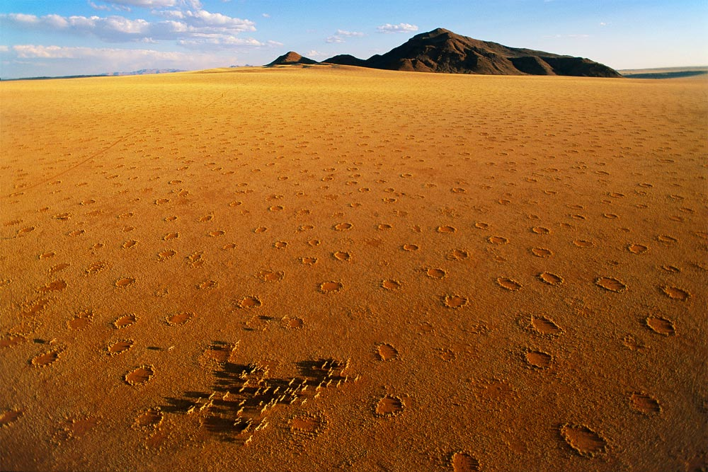 Fairy Rings Africa Namibia Desert - With Cattle