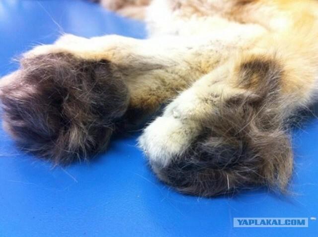 Sand Dune Cat Furry Paws