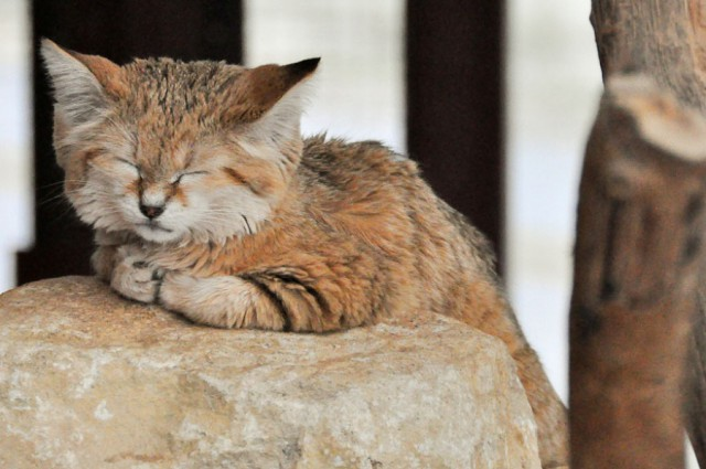Sand Dune Cat Sleeping