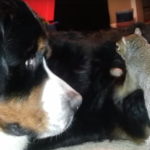 Squirrel Tries To Hide Nut Inside Dog