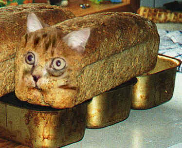 Awesome Photos From Russia With Love - Cat Loaf