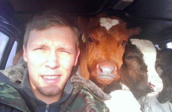 Awesome Photos From Russia With Love - Cows In A Car