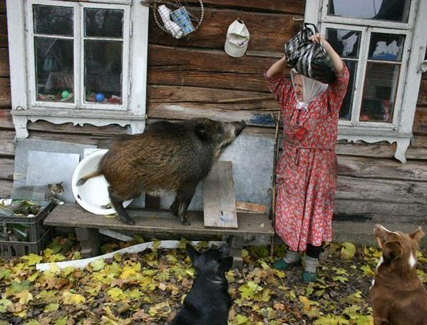Awesome Photos From Russia With Love - Dogs Boars And Granny