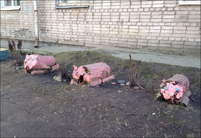 Awesome Photos From Russia With Love - Pigs