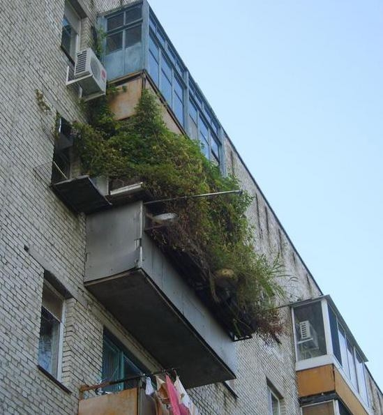 Hilarious Balconies - Planted a Forest