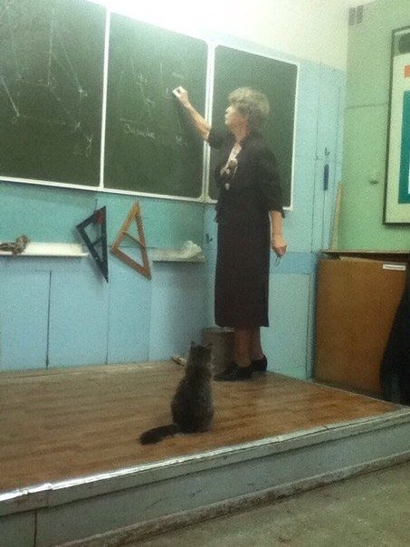 Awesome Photos From Russia - Cat Pupil
